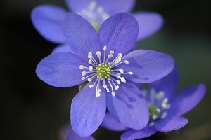 bereavement and six healing stages of grief blue flower
